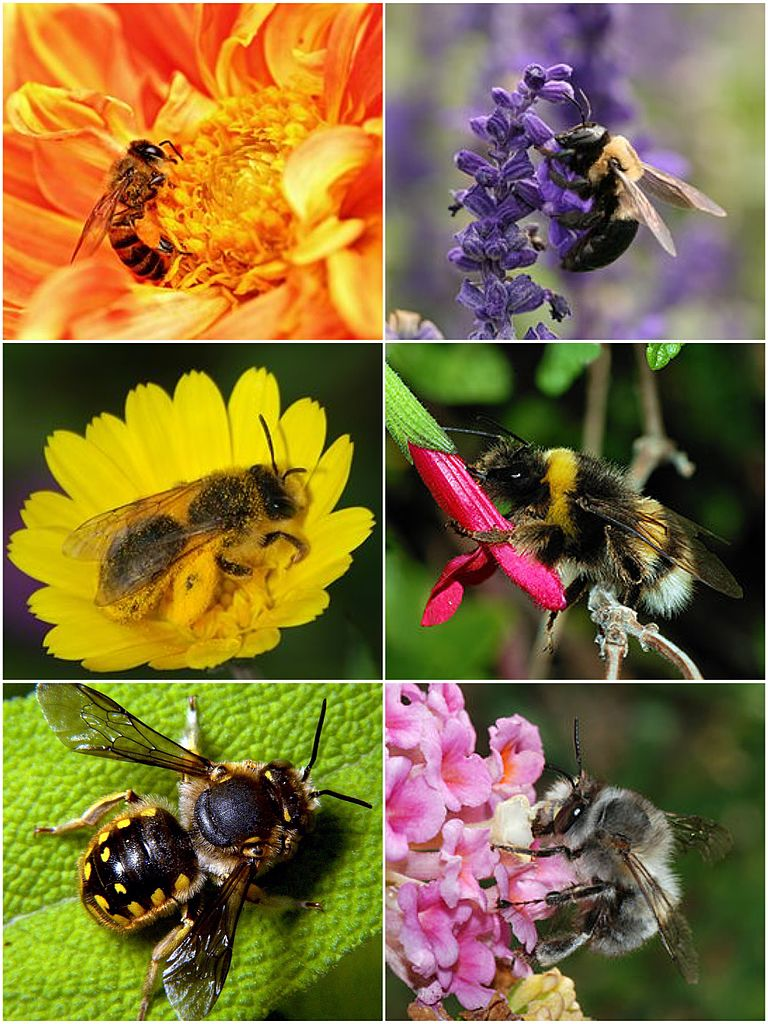 Qui connaît les abeilles ?